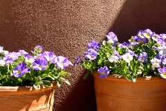 Potted flowers on home patio