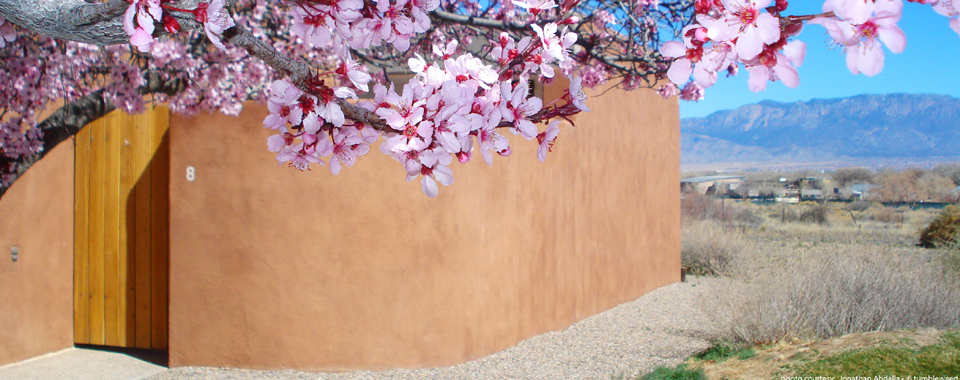 Blooming cherry tree, next to a home patio gate with view of mesa and mountains